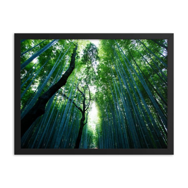 Bamboo Forest. Framed Photo Poster