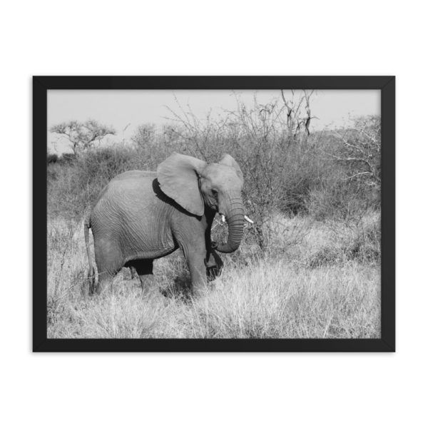 Elephant Framed Photo Poster