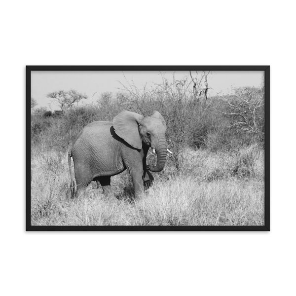 Elephant Framed Photo Poster