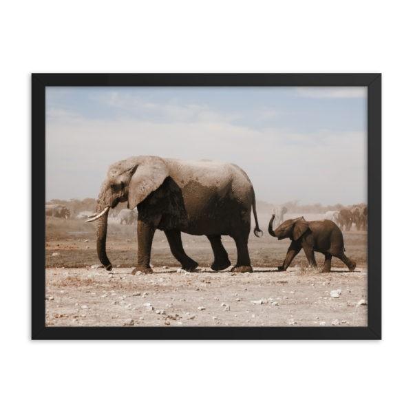 Elephant in Savanna. Framed Photo Poster