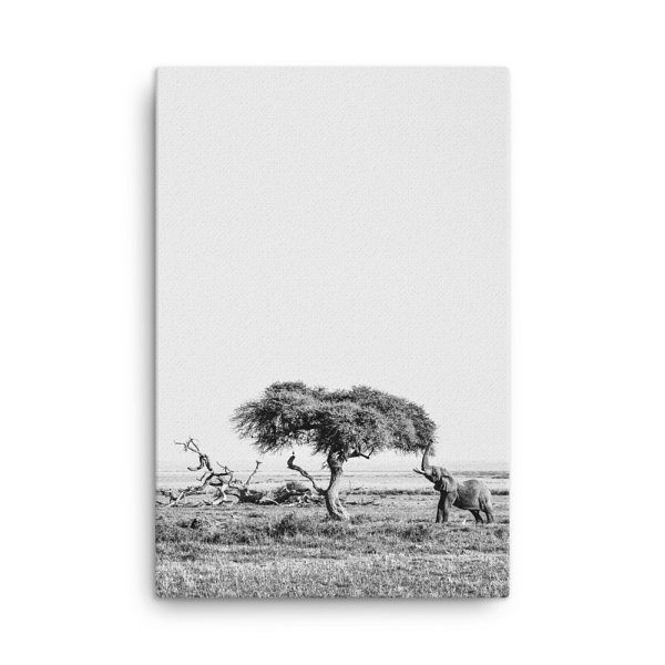 Elephant Photo Print Canvas