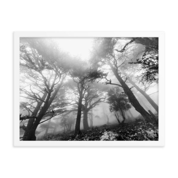 Magic Forest Framed Photo Poster