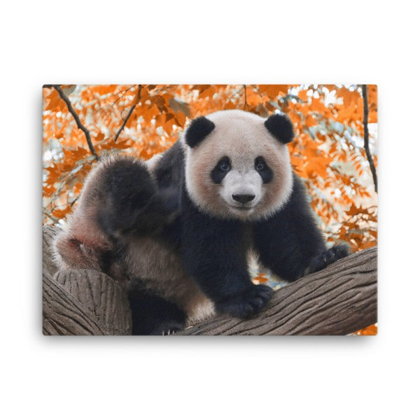 Panda on the Tree at Autumn. Photo Print Canvas