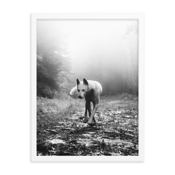 Wolf in the Fog Forest. Framed Photo Poster